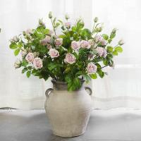 Best 5 Heads England Roses wholesale