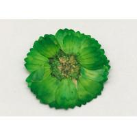 Best Dye Green Dried Flowers , Dried Daisy Flowers For Epoxy Recycled Flowers wholesale