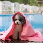Best 66*43 large pet bath towel dog bath towel synthetic chamois PVA towel Clean  pet towel wholesale