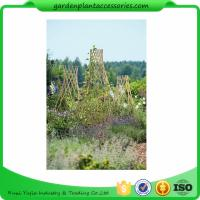 Best Straight Garden Bamboo Stakes wholesale