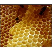 Best Pure Crude Beeswax wholesale