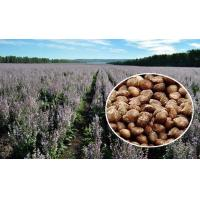 China Brown Appearance Natural Agricultural Products Perilla Seeds 2 - 3mm Size on sale