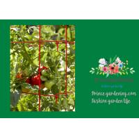 Best Powder Coated Steel Support For Tomato Plants wholesale