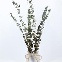 Best Customized Natural Preserved Foliage For Gift / Wedding / Home / Shop wholesale