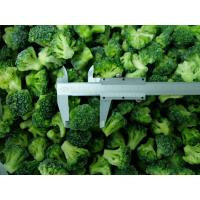 Best Frozen IQF Broccoli wholesale