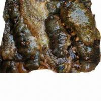 Best East China Sea Fresh Sea Cucumber, Highest Grade and Green Product wholesale