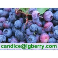 Best 100% Pure organic blueberry concentrate/pure blueberry juice wholesale