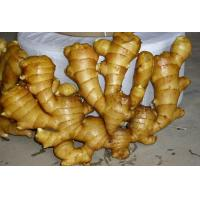 Best 2016 New Fresh Chinese Yellow Color Ginger Export to , Karchi Port, Pakistan wholesale