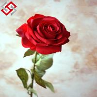 China High Quality Artificial Wedding Decorative Real Touch Silk Rose Flower on sale