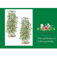 Best Heavy Duty Metal Tomato Cages wholesale