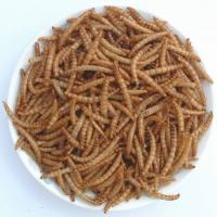 Best Microwave dried mealworm-Fish food wholesale