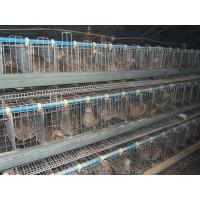 Best Chicken Cage,Battery Cages Laying Hens, Poultry Farming Equipment wholesale