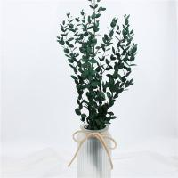 Best Artificial Dried Eucalyptus Plant , Preserved Silver Dollar Eucalyptus wholesale