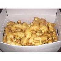 Best 2016 New Crop China Quality High Fresh Organic Yellow Color Ginger at Cheap Price Export to Chittagong, Bangladesh wholesale