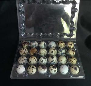 Cheap Disposable plastic quail egg tray 24 holes quail egg tray plastic egg tray for for sale