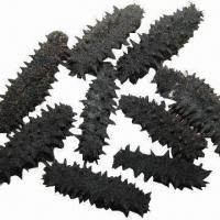 Best East China Sea Dried Sea Cucumber, Highest Grade and Green Product wholesale