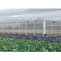 Best Hydroponic Planting Agricultural Polycarbonate Greenhouse wholesale