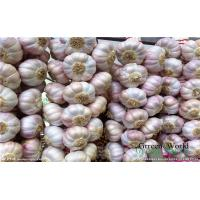 Cheap 2016 China New Fresh Garlic Normal or Pure White Exporting to Chittakong, for sale