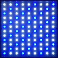 Best IP20 150W AC 90 - 240V LED Plant Growing Lamp / Plant Grow Lights System With 38 Degree wholesale