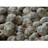 Best 2016 New Fresh Harvest Garlic Normal or Pure White Color Exporting to Bangladesh wholesale