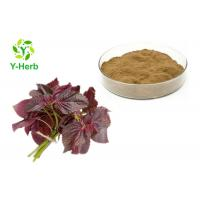 Best Water Soluble Perilla Leaf Extract Powder Perilla Frutescens L Lowering Blood Pressure wholesale