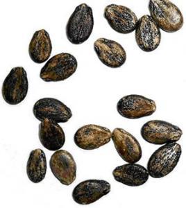 China Big/medium/small Black melon seed on sale
