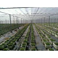 Buy cheap Mothproof Agriculture Non Woven Fabric For Vegetable Protect Durable from wholesalers