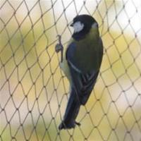 Best Anti-bird Net,15-30mm opening,1m-25m width,black,white and green colour wholesale