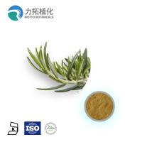 Best 1. GMP Manufacture Rosemary Extract Rosmarinus officinalis wholesale