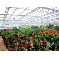 Best Flower Exhibition Multi Span Greenhouse , High Output Polycarbonate Sheet Greenhouse wholesale