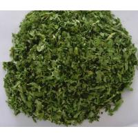 Cheap DRIED PARSLEY LEAVES 10X10MM for sale