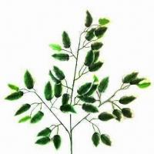 Best Artificial Benjamina Ficus, Onate Color, Attractive Figuration wholesale