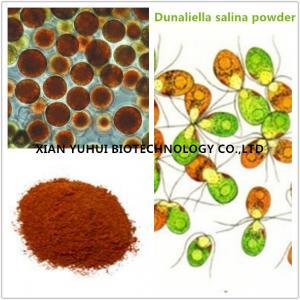 China Anti cancer eye protecting Natural Salt algae extract,salt algae powder on sale