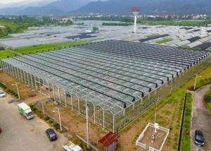 Best Irrigation Clear Glass Tomatoes Shade Greenhouse wholesale