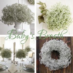 Best Bouquet-Baby′s Breath wholesale