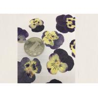 Best Purple Pansy Real Pressed Flowers True Plant Material For Press Picture Ornaments wholesale