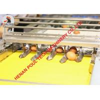 China 304 Stainless Steel Materials Automatic Chicken Egg Grading Machine & Egg Packing Machine for Poultry Farm 3000 pcs/Hour on sale