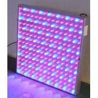 Best high intensity red blue yellow 50W 300MA led plant growing lights 85 - 264V for hydroponic wholesale