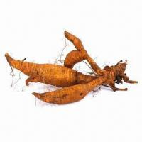Best Pueraria Root Extract/Pueraria Extract wholesale