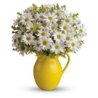 Best Bouquet-Daisy wholesale