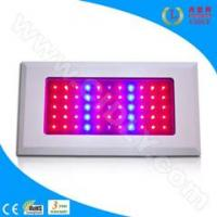Best 55*3W LED Grow Light for Flowers, Garden, Greenhouse, Fruits wholesale