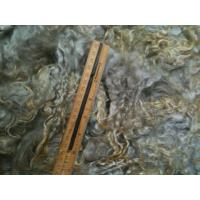 "Cheap RAW KID Mohair ~ 1 Ounce ~ 4-5"" ~ COLORED for sale"