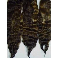 Best Exquisite Premium ~ Dark Brown ~ 7-8 in. wholesale