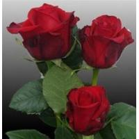 Buy cheap Sexy Red Rose from wholesalers