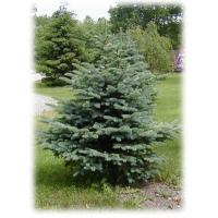 China Christmas Trees Overview on sale