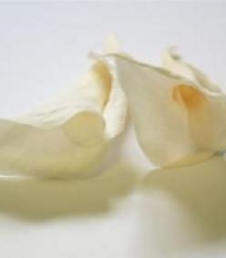Cheap 3 Ivory Mini Calla lilies . for sale