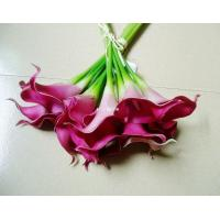 Best Calla lily wholesale