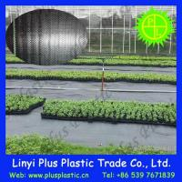 Best Grass Cloth Agricultural Ground Cover wholesale