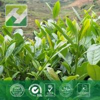 China Green Tea Extract Monograph on sale