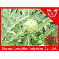Best Liver & Lung Health Artichoke extract cynarin wholesale